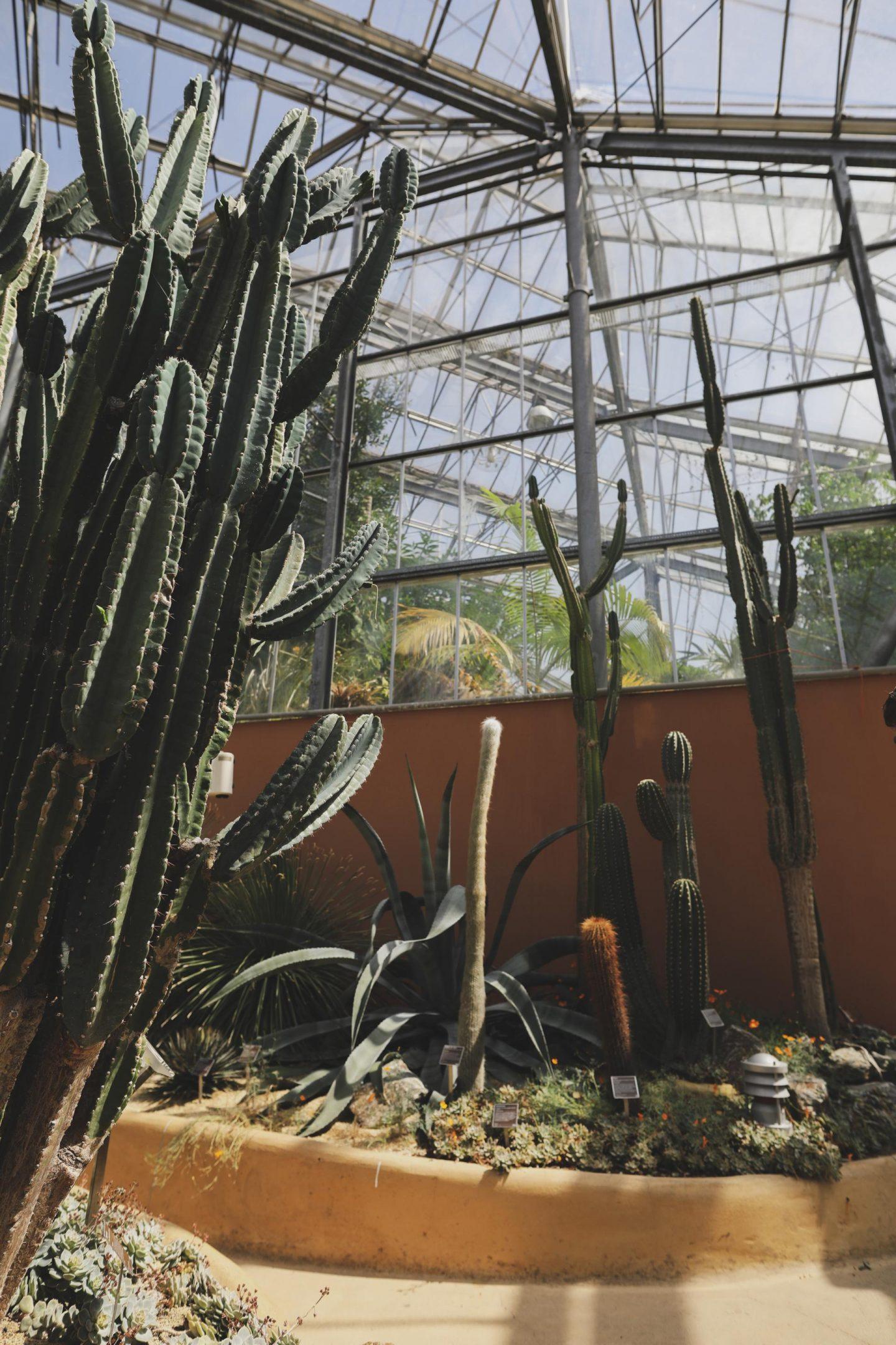 cactus hortus botanicus